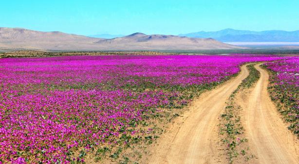 Цветущая пустыня 3.jpg